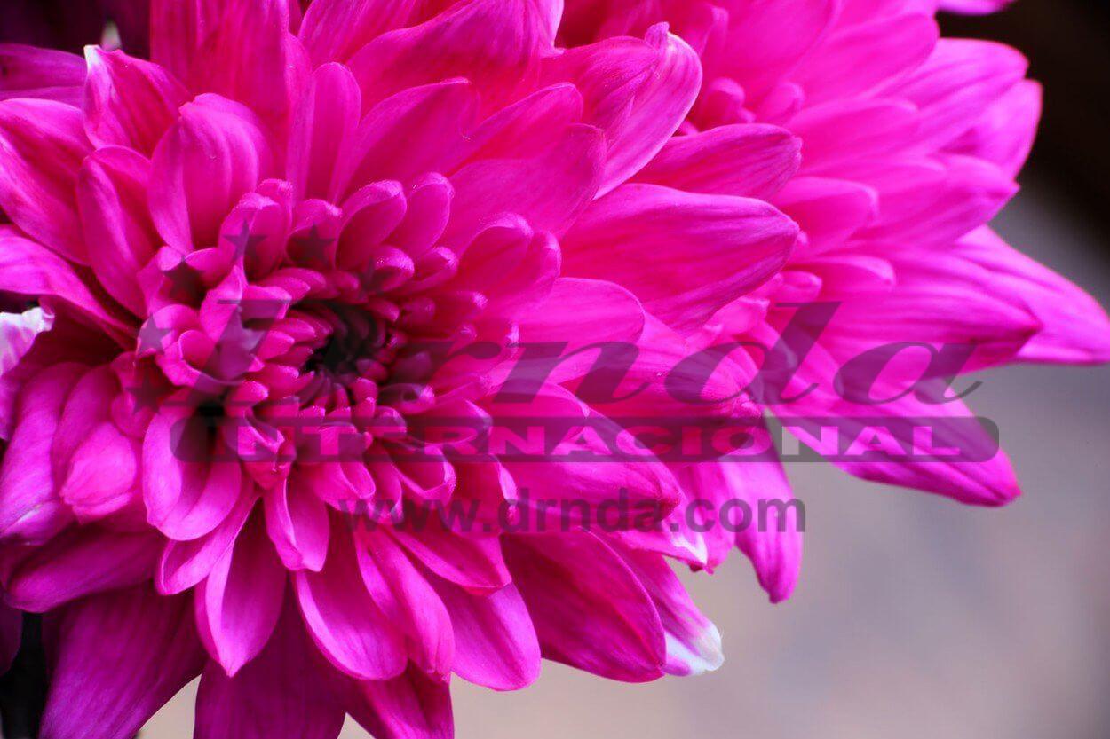 Cveće za sahranu